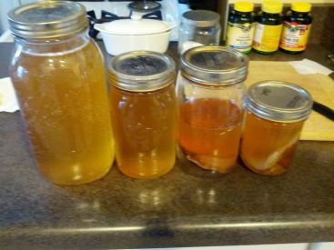 2 jars kombucha, 2 jars of mothers w/ kombucha